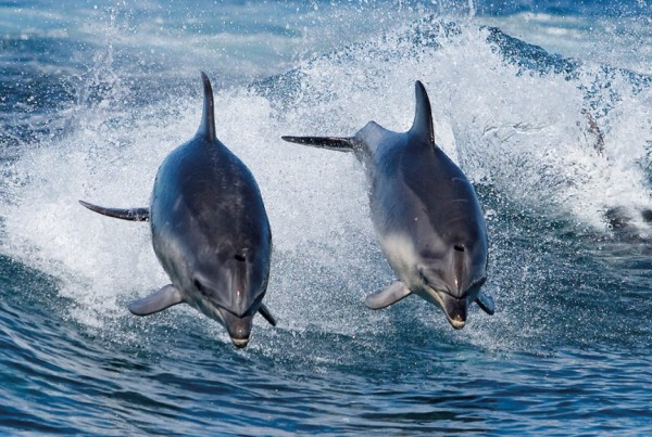 Slideshow-BIC-Dolphins-1024x5801